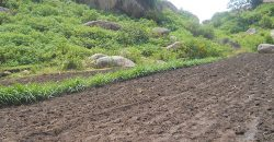 1.5 Acre Land For Sale In Bungoma