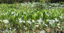 Residential Plots For Sale Bungoma (2)