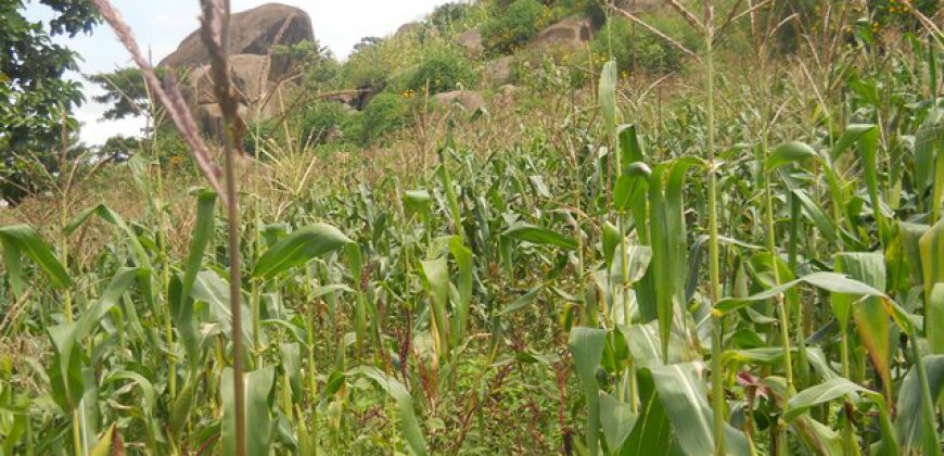Fertile Land For Sale In Bungoma (0.5 acres)