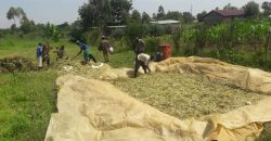 House And Land For Sale In Bungoma (3.5 acres)