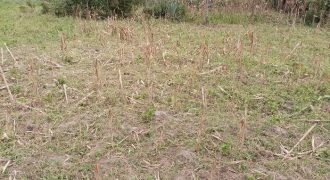 PLOT FOR SALE IN BUNGOMA
