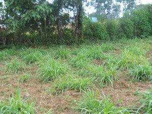 Residential Plot For Sale In Bungoma (1) 1