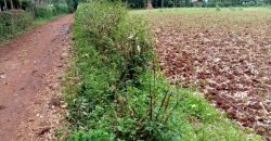 2 Residential Plots For Sale In Misikhu