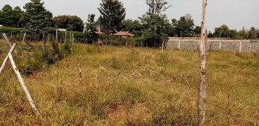 1 Prime Plot for Sale in Bungoma Khalaba Estate