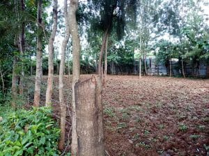 Hot 100 by 100 Plot for Sale in Kanduyi Bungoma County 1