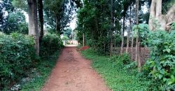 Hot 100 by 100 Plot for Sale in Kanduyi Bungoma County