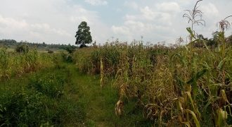 Fertile Agricultural Land for sale in Bungoma Luucho area(2 acres)