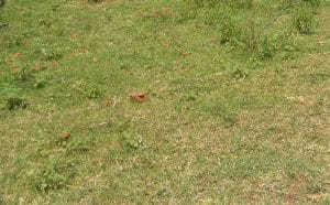 Prime 50 by 100 Residential Plot for Sale in Kanduyi Bungoma County 1